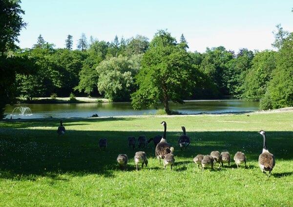 Lac_Parc_Bourran_Merignac