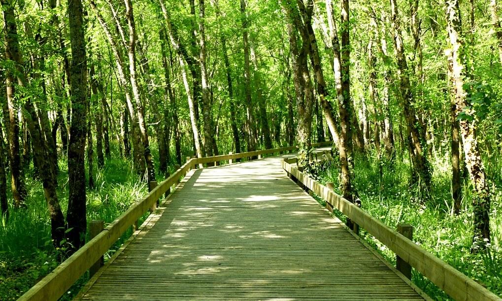 La marche rapide ou sportive bordeaux et vous - Les bienfaits de la marche rapide sur tapis ...