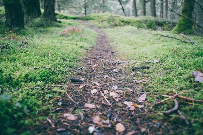 marche-vivifiante-chemin-canejan-cestas