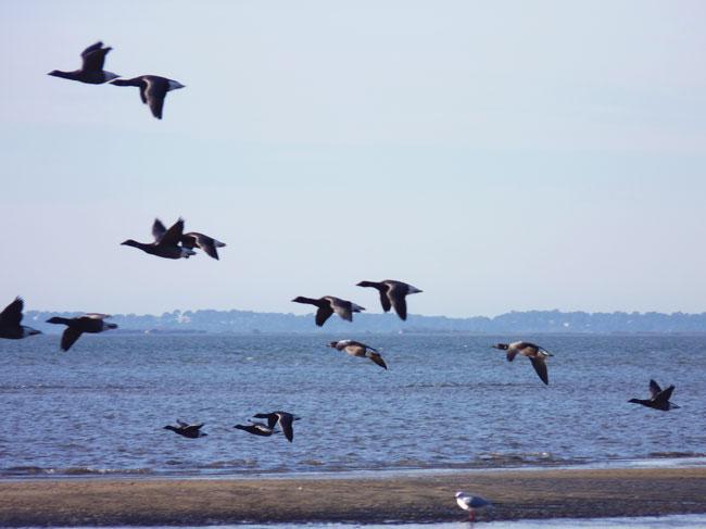 marche-printemps-andernos-oiseaux