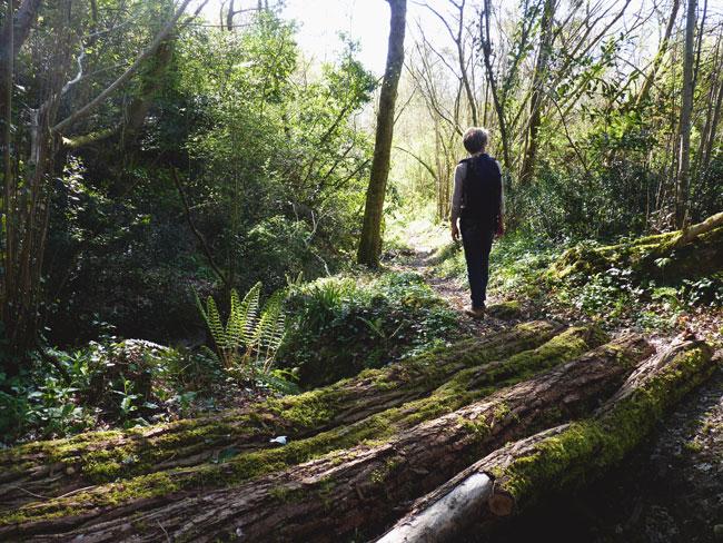 decouverte-coteaux-garonne-bouliac-forêt