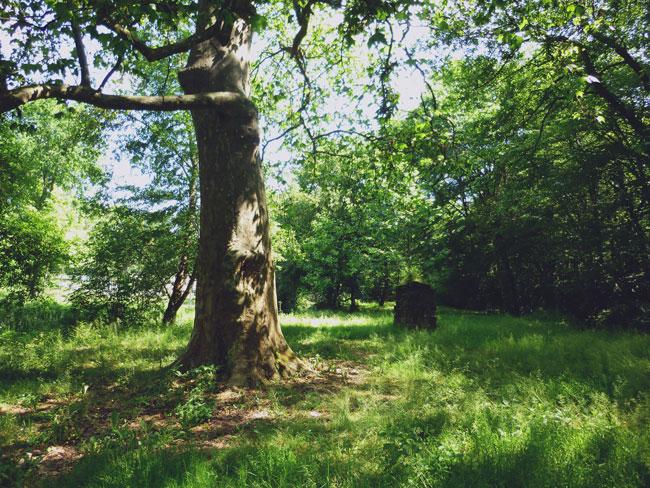 balade-canejan-foret-arbre-puits