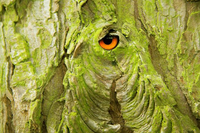 balade-contee-arbre-oeil