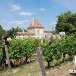 nabuco-rencontre-vin-particulier