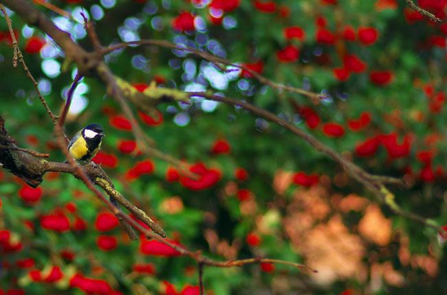 balade-contee-noel-oiseau